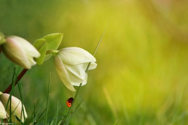 Le printemps dans le jardin