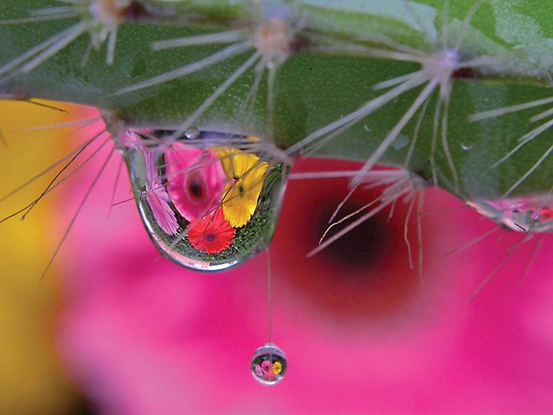 pixel podrido alberto guzman macro flowers