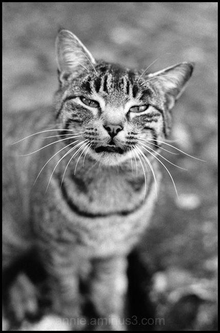 Mystérieux chat