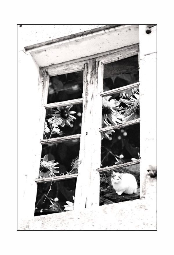 Fenêtre au chat
