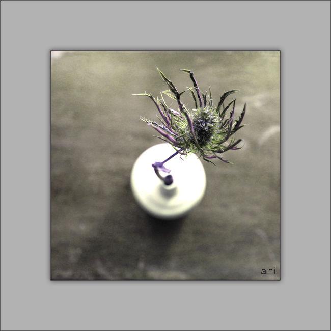 Petit vase au chardon violet