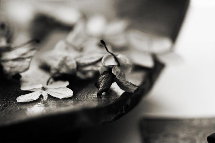 Flocons d'hortensia