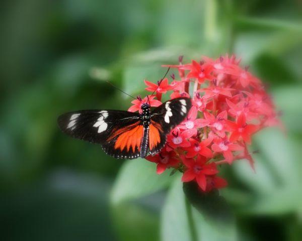 Monteverde Butterfly Garden - Costa Rica #13