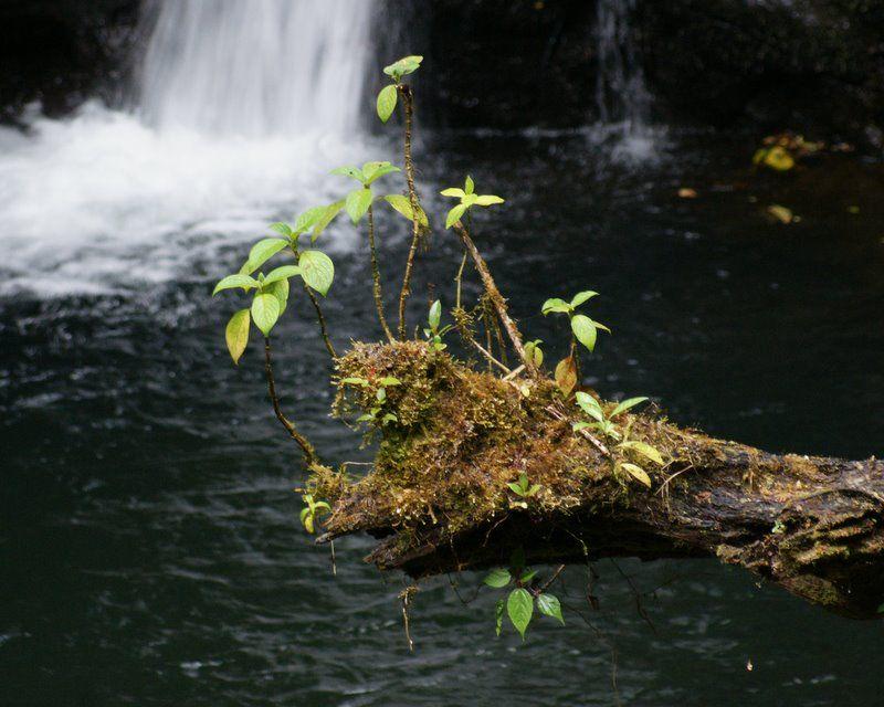 Still in the rainforest; still wet