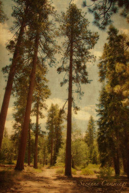 San Bernardino National Forest, California