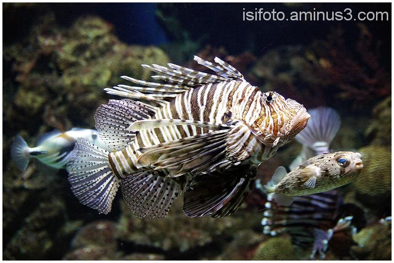 Aquarium Barcelona - 06