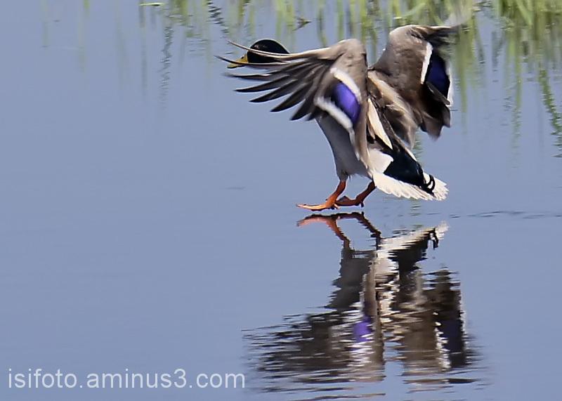 Aterrant /Aterrizando/Landing