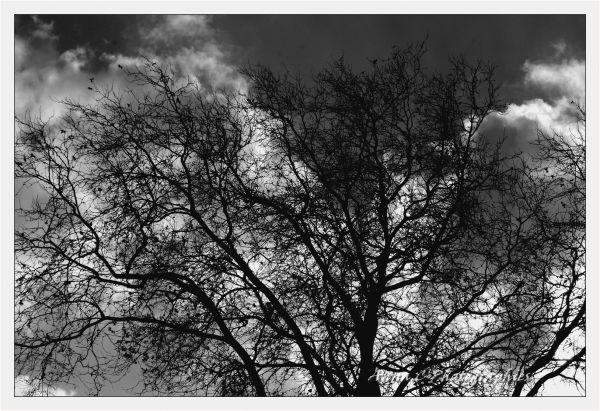 Un arbre en hiver