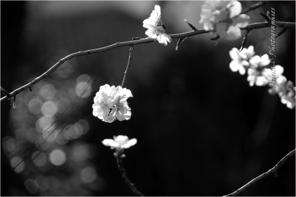 Ikebana spring - 2 -
