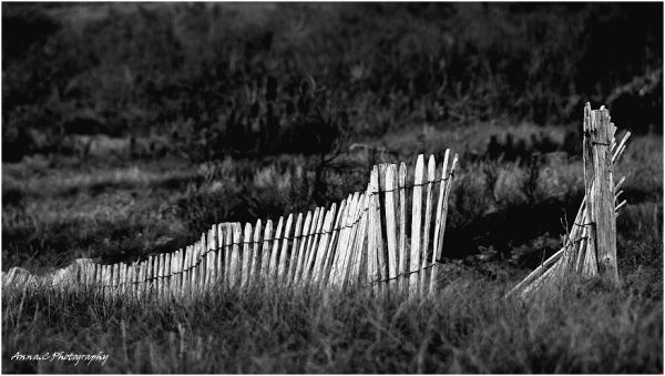 The broken fence