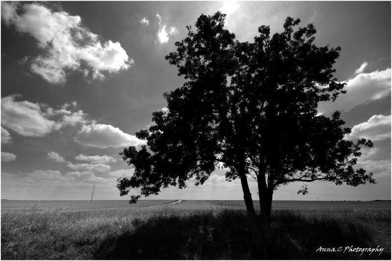 A l'ombre de mon arbre