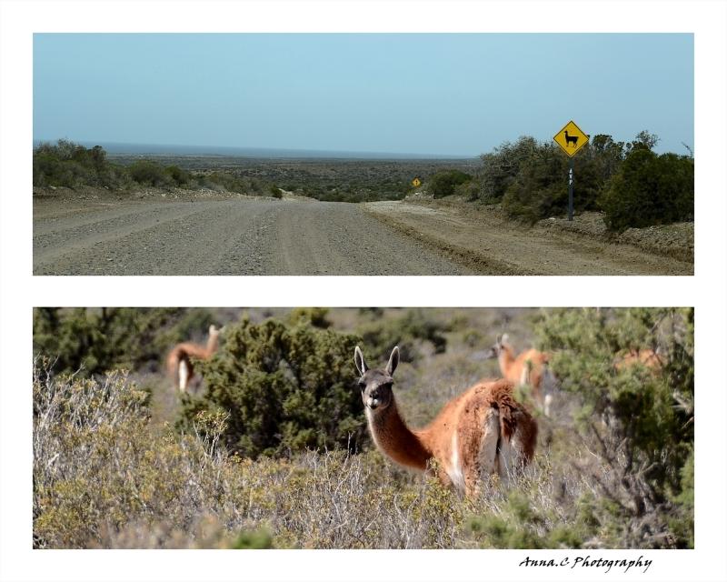 Road trip # 6 - Attention Lamas !