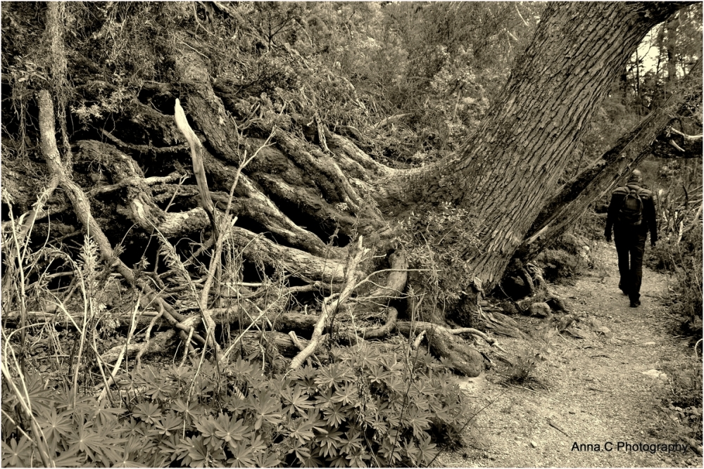 Millennium trees