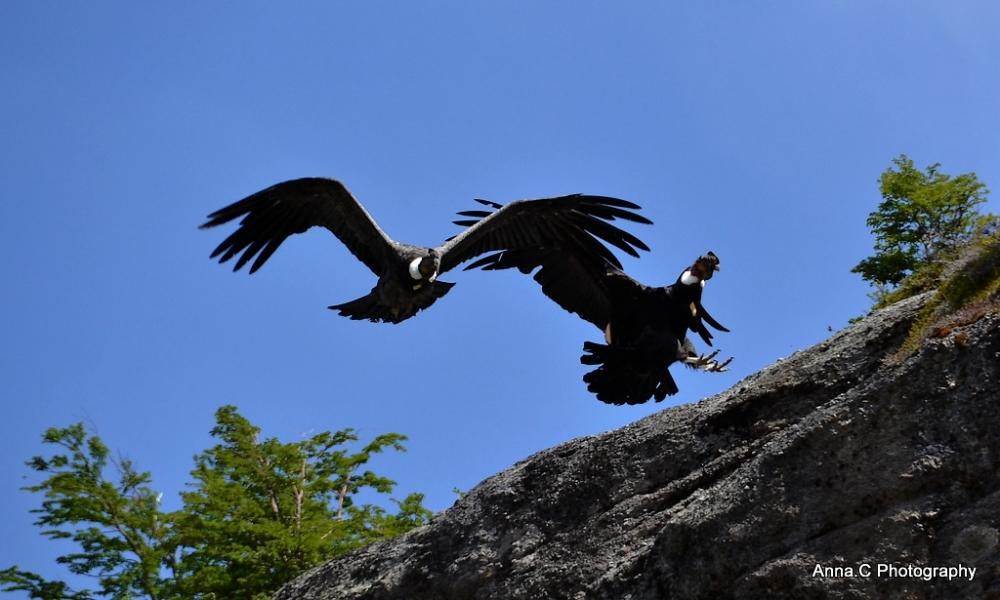 El  Condor pasa III - Atterrissage