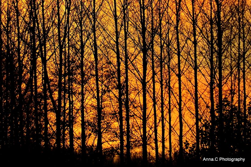 Incendie dans la forêt