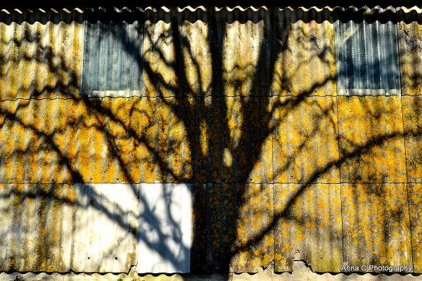 L'arbre caméléon