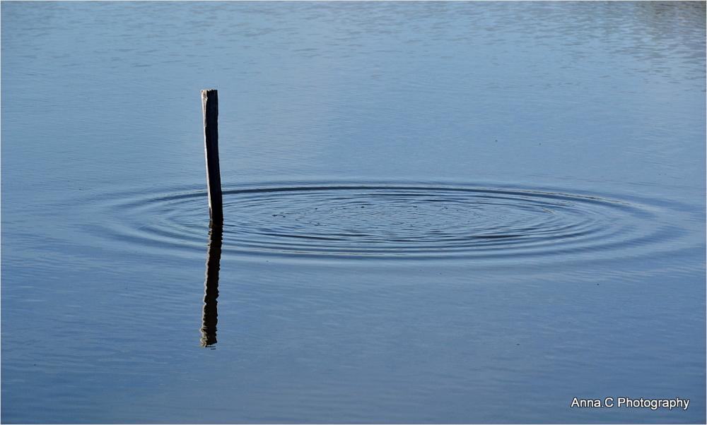 Le rond dans l'eau