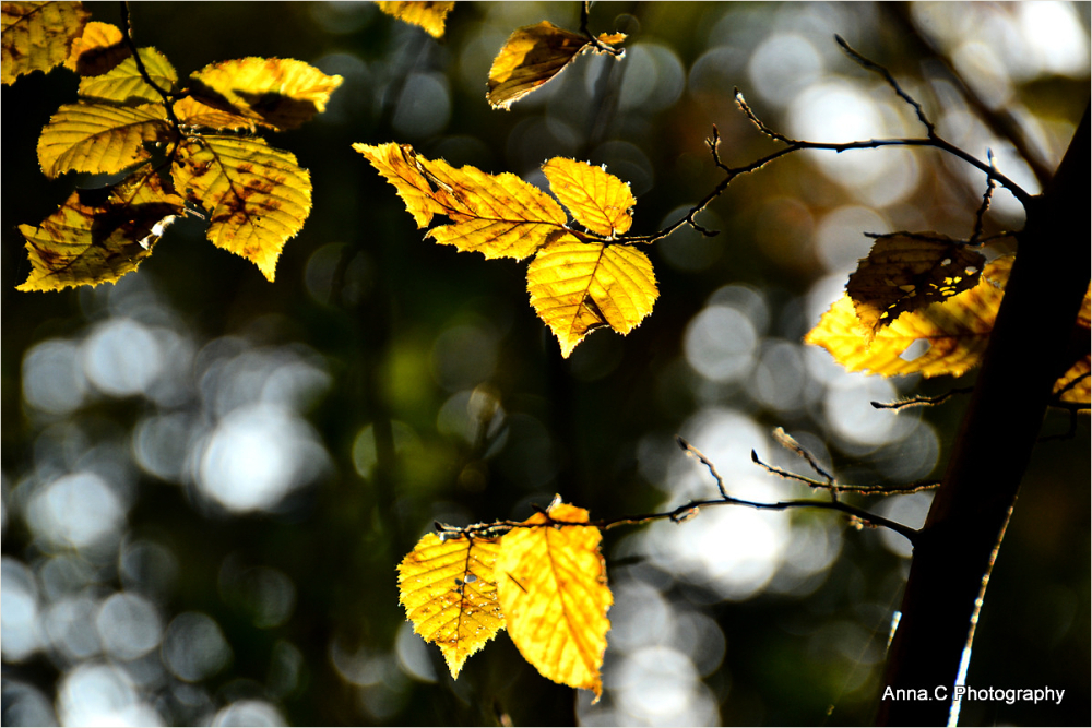 Autumn light and colors