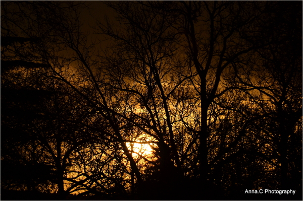 Sunset in the trees