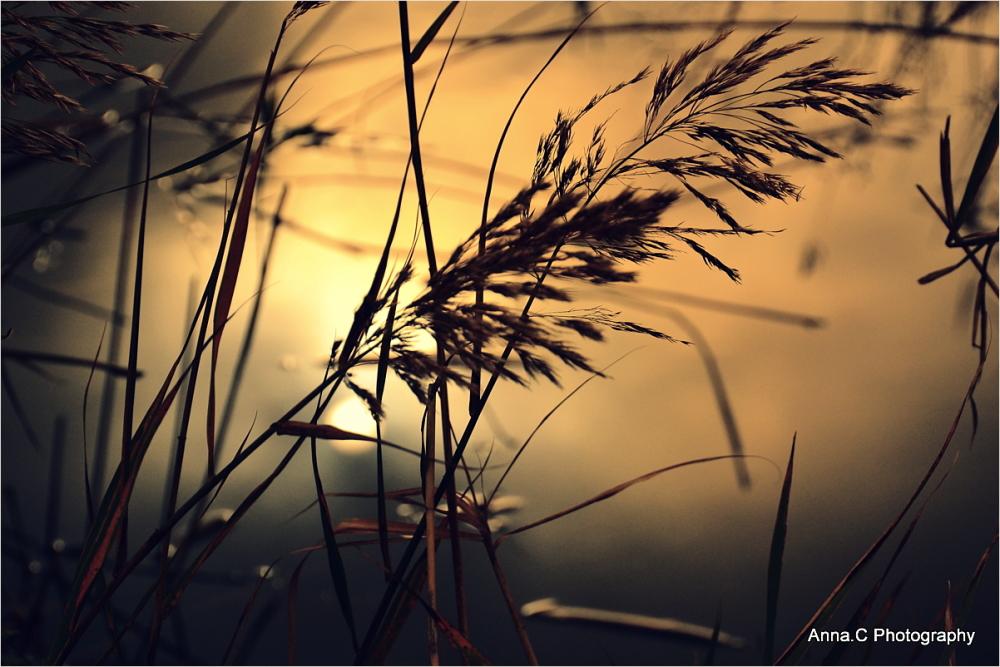 Caresse au soleil