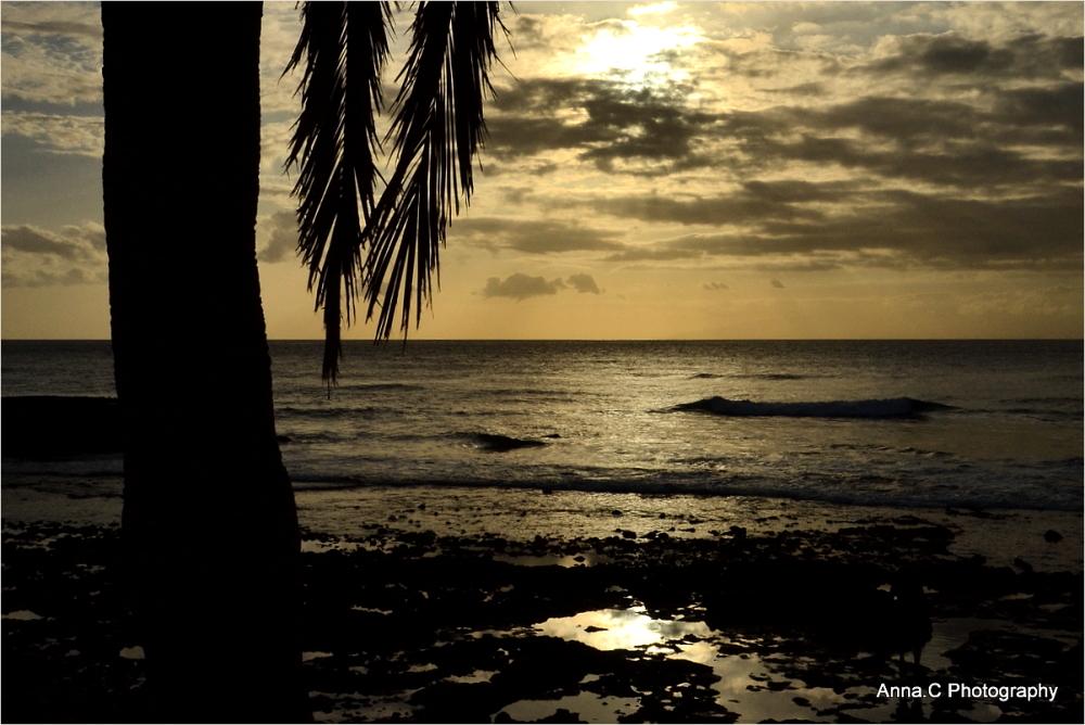 Sunset sous les palmiers