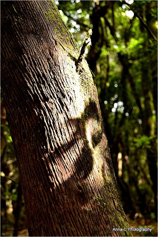 Dans la forêt primaire #3