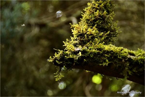 Dans la forêt primaire #6
