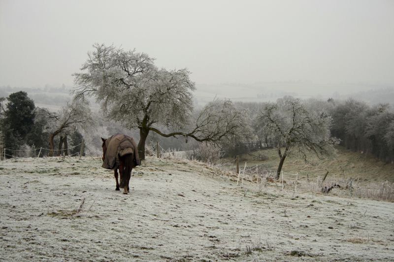 horse, herefordshire, pub, frost, farm