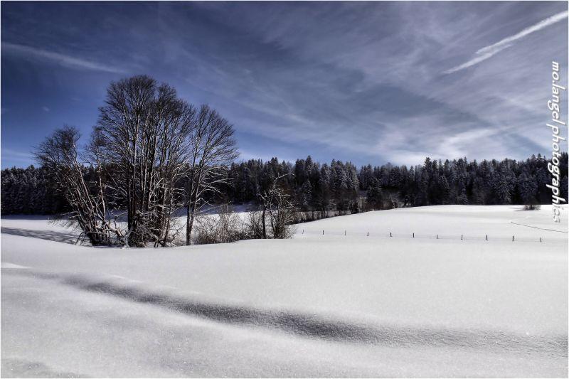 Tout est blanc de neige