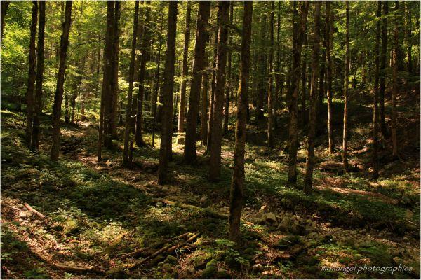 Promenons-nous dans les bois.....