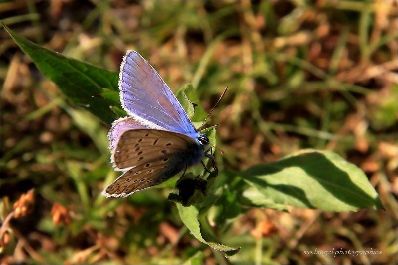 Le cri du papillon