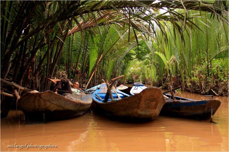 La sieste à l'ombre des palmiers