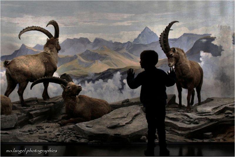 Visite au musée d'histoire naturelle