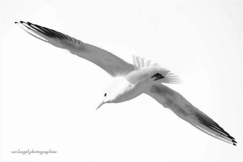 Un petit vent de liberté