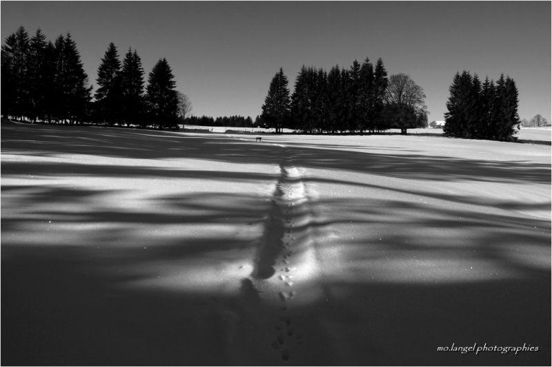 Douce caresse des ombres sur la neige