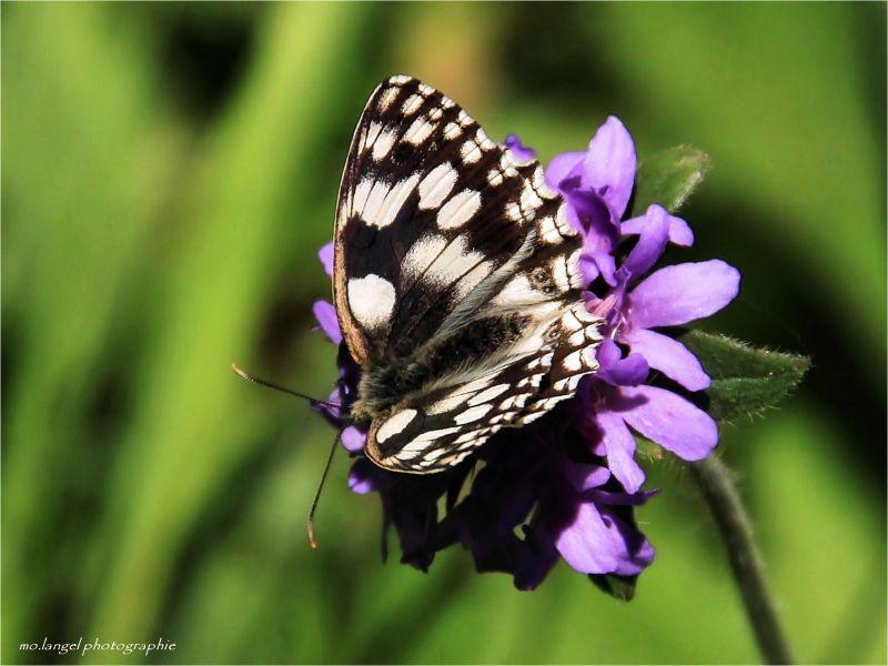 Papillon vole