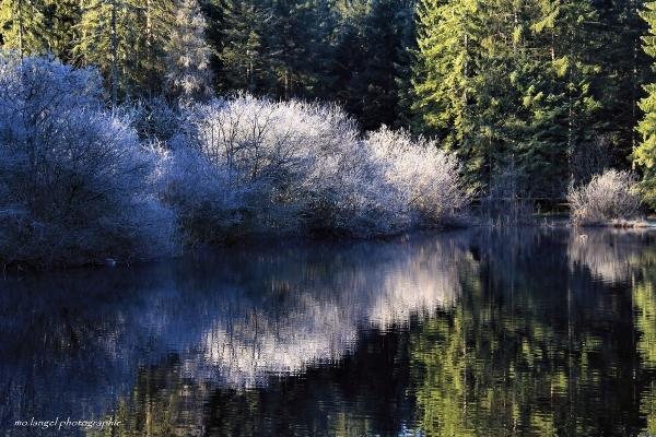 Le givre de l'étang