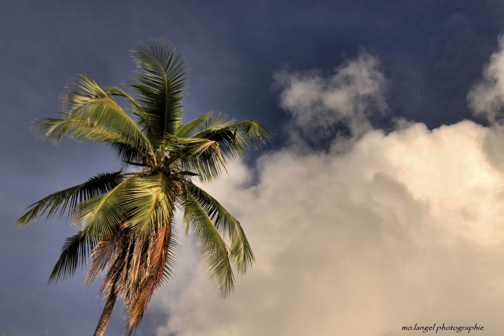 Le palmier dans les nuages