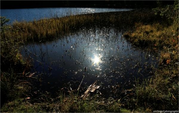 Au coeur de l'étang