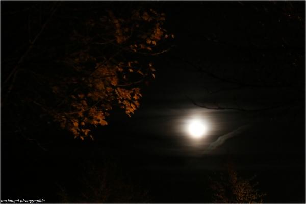 Songe d'une nuit d'automne