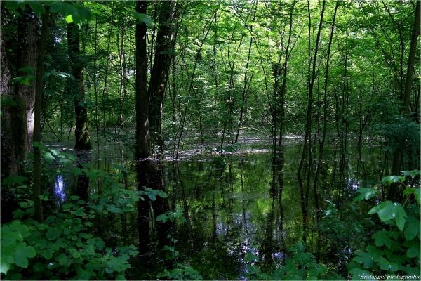 La forêt les pieds dans l'eau
