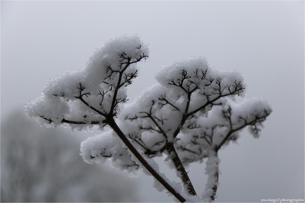 Bouquet de flocons de neige