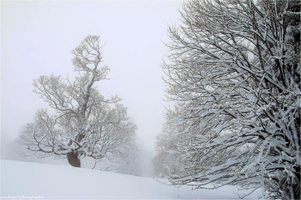 Randonnée hivernale (3)