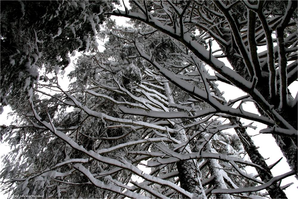 Sous les grands arbres