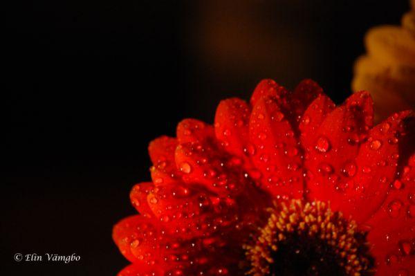 Flower Drop