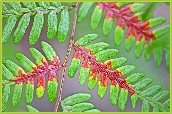 fern in the rain