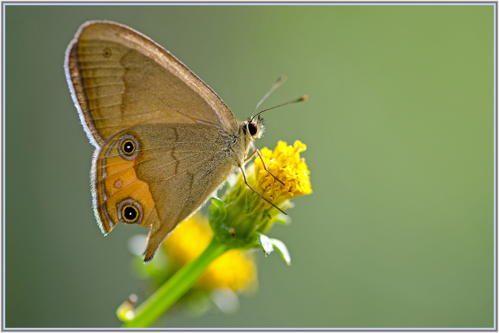 small butterfly with broken wings