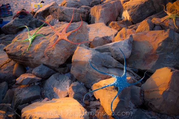 Starfish I