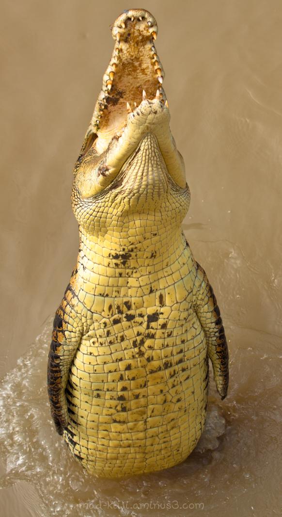 Croc VII