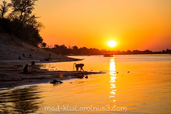 Botswana Sunset VI